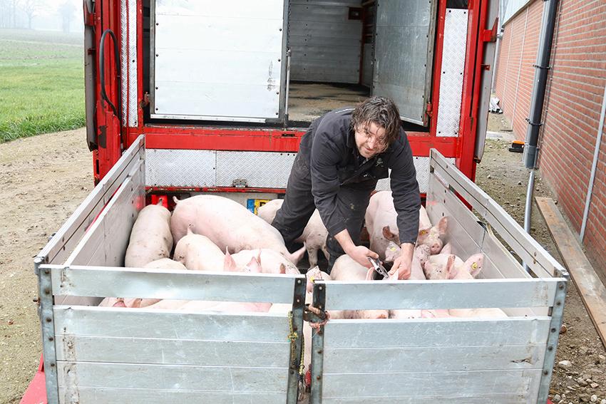 Een goede prijs voor al je varkens?